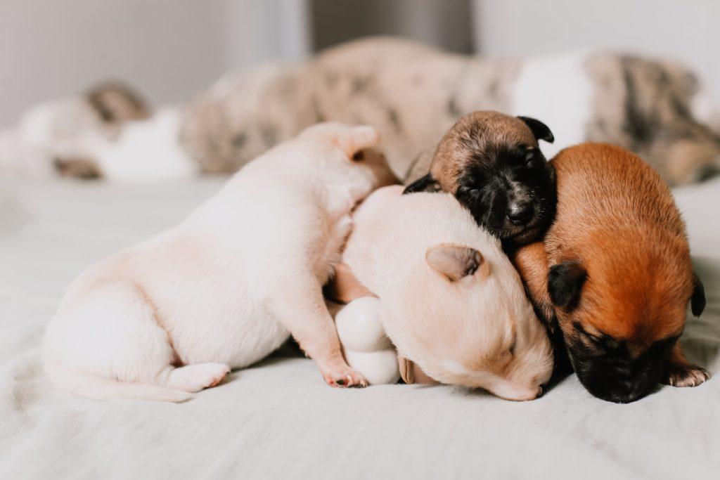 sleepy puppies cuddling