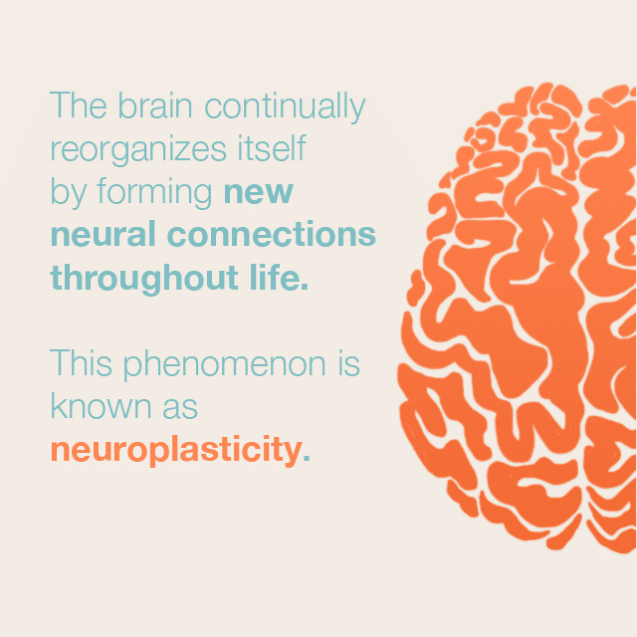 Neuroplasticity is what happens when your brain forms new neural pathways.