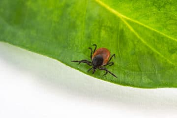 The Complexities of Lyme Disease (And How to Find Real Help)